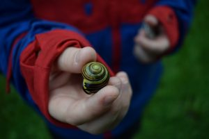 early-years-snail
