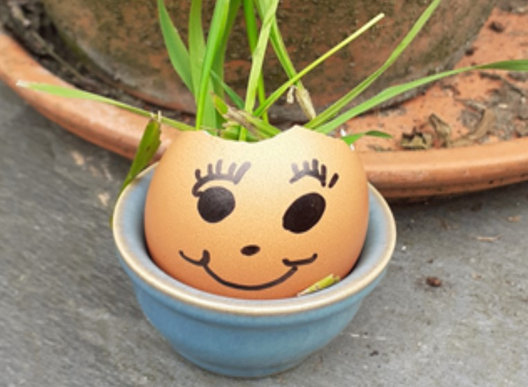 outdoor lesson activity eggy cress head
