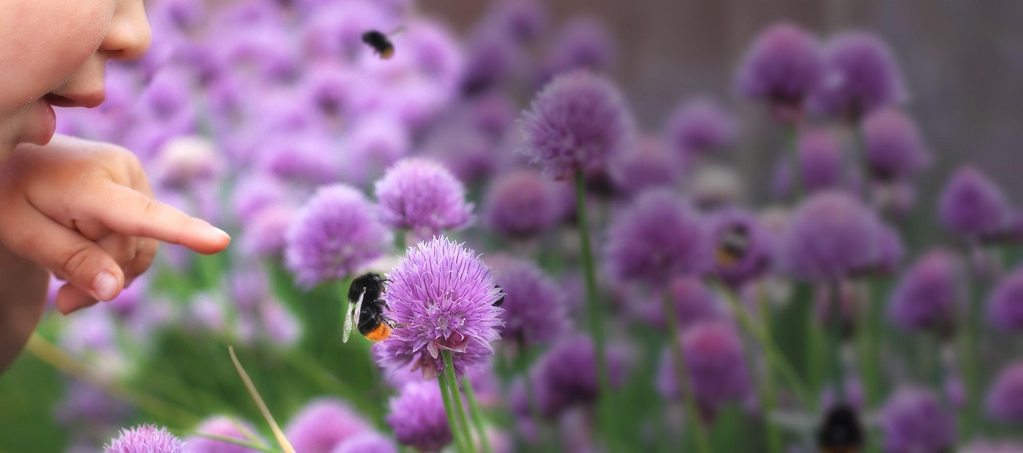 South Downs National Park Trust Beelines Pollinators in Schools