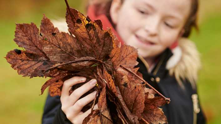 Schoolchild holds a handful of autumn leaves
